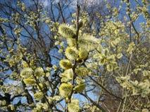 Floración del árbol Foto de archivo libre de regalías