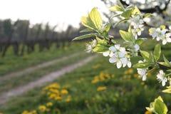 Floración del árbol en un camino Fotos de archivo