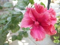 Floración del amor Imagen de archivo libre de regalías