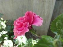 Floración del amor Imagenes de archivo