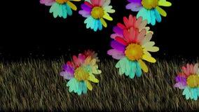 Floración del flor de la flor de la margarita libre illustration