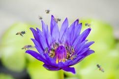 Floración del flor del Otus Imágenes de archivo libres de regalías