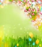Floración del manzano e hierba verde con los escapes ligeros imagen de archivo libre de regalías