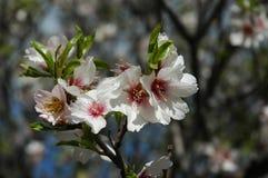 Floración del resorte Imágenes de archivo libres de regalías
