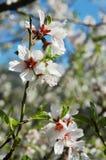 Floración del resorte Imagen de archivo