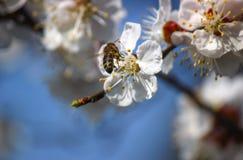 Floración del resorte Imagen de archivo libre de regalías