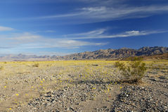 Floración del resorte en Death Valley Imagenes de archivo