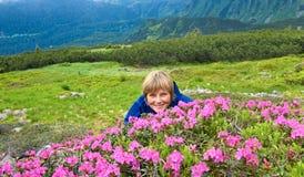 Floración del rododendro de la montaña Imagen de archivo libre de regalías