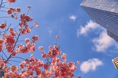 Floración del Sakura en París fotos de archivo