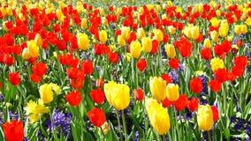 Floración del tiempo de primavera almacen de video