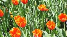 Floración del tiempo de primavera almacen de metraje de vídeo