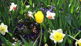 Floración del tiempo de primavera metrajes