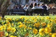 Floración del verano Imágenes de archivo libres de regalías
