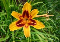 Floración del verano Fotografía de archivo