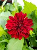 Floración a distancia Imagen de archivo libre de regalías