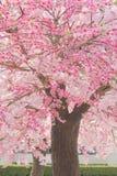 Floración en ciudad Fotografía de archivo libre de regalías