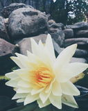 Floración en la sequía Fotografía de archivo
