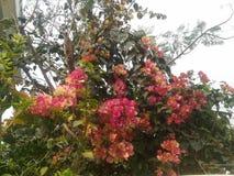 Floración espesa Imagenes de archivo