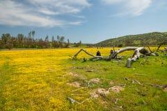 Floración estupenda 2019 de California Campo de flores amarillas salvajes hermosas en el llano de Carrizo foto de archivo
