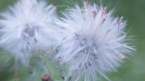 Floración hermosa de las flores fotos de archivo