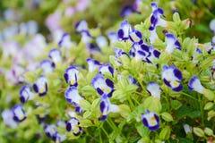 Floración hermosa en parque de la flora Fotos de archivo