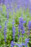 Floración hermosa en parque de la flora Imagen de archivo libre de regalías