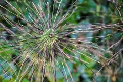 Floración inusual en verano tardío Imagenes de archivo