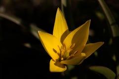 Floración lilly Imágenes de archivo libres de regalías