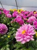 Floración para la primavera imágenes de archivo libres de regalías