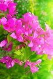 Floración roja de la flor Imagenes de archivo