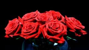 Floración roja de las rosas