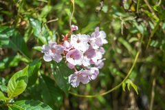 Floración rosada de la flor fotos de archivo libres de regalías