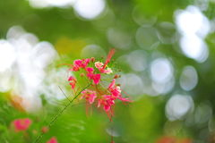 Floración rosada de las flores Fotografía de archivo libre de regalías