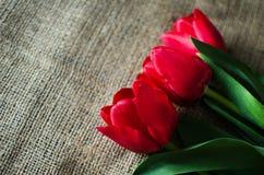 Floración suave delicada de los tulipanes Imagenes de archivo