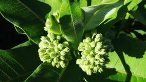 Floración verde del verano Foto de archivo libre de regalías