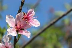 Floraci?n de la primavera fotografía de archivo