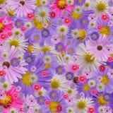 Floraciones Fotografía de archivo