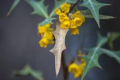 Floraciones amarillas de una flor imagen de archivo libre de regalías
