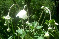 floraciones blancas Fotos de archivo libres de regalías