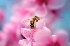 Floraciones coloridas dof Imagenes de archivo
