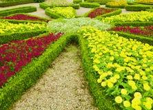 Floraciones de colores fotografía de archivo libre de regalías