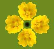 Floraciones de Cowslip Imagen de archivo