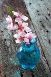 Floraciones de la cereza Imagen de archivo libre de regalías