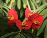Floraciones de la flor fotos de archivo