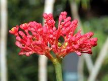 Floraciones de la flor foto de archivo