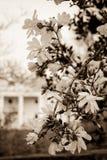 Floraciones de la mansión Imágenes de archivo libres de regalías