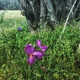 floraciones de la primavera Imagenes de archivo