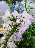 floraciones de la primavera Fotos de archivo libres de regalías