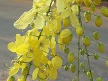 Floraciones de oro foto de archivo