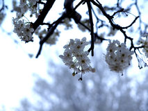 Floraciones del árbol imagenes de archivo